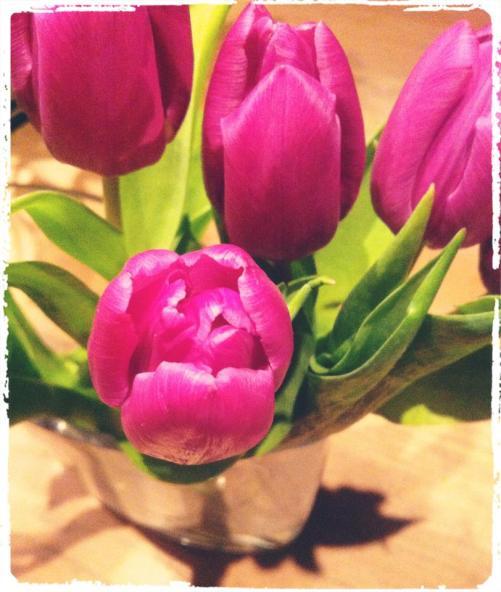 tulip ellevitb